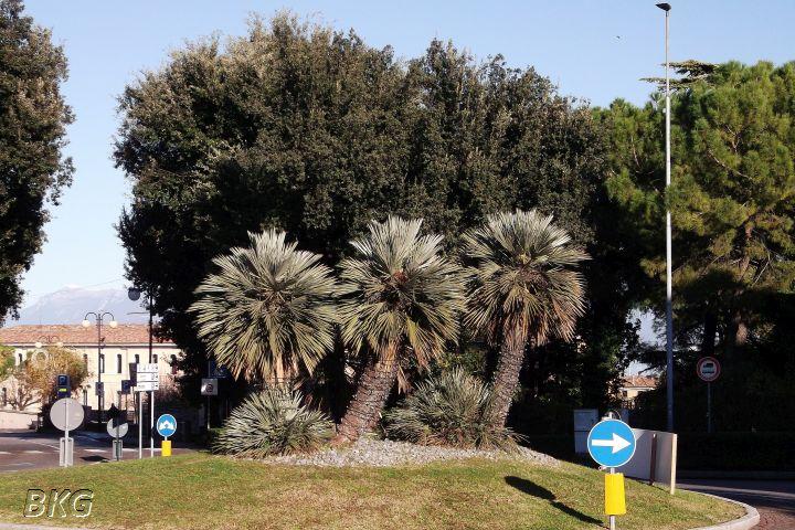 Desenzano01